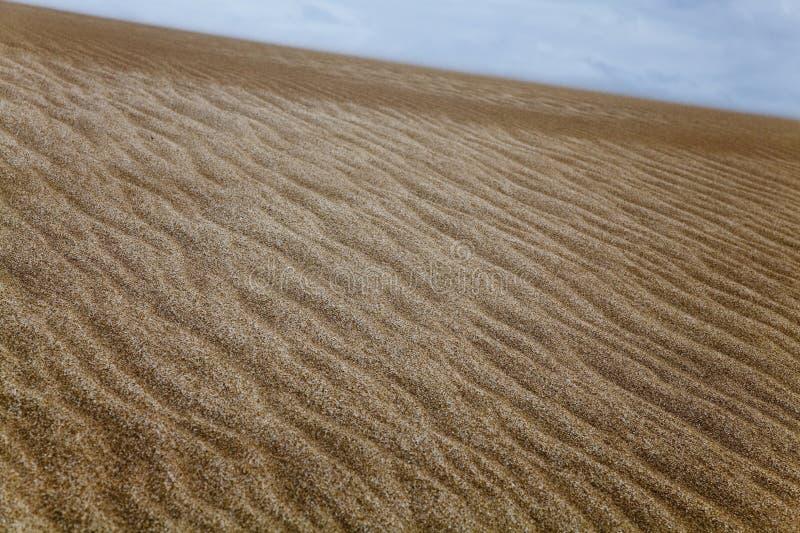 Дюна на пляже около виллы Gesell стоковое изображение rf