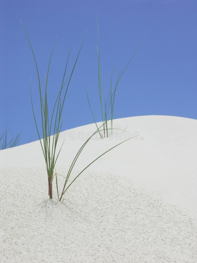 дюна стоковое фото rf