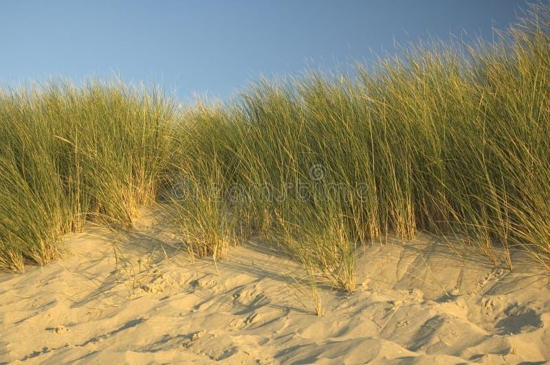 дюны голландские стоковая фотография