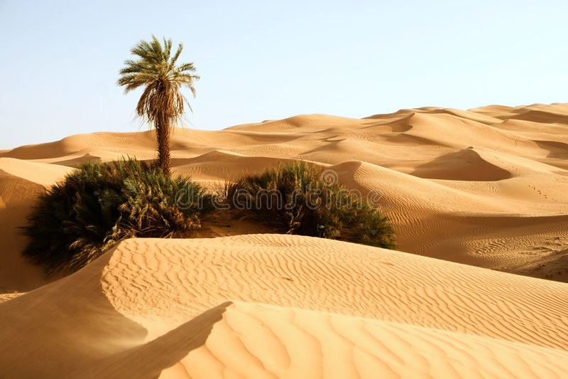 дюны Ливия awbari один песок ладони стоковые фотографии rf
