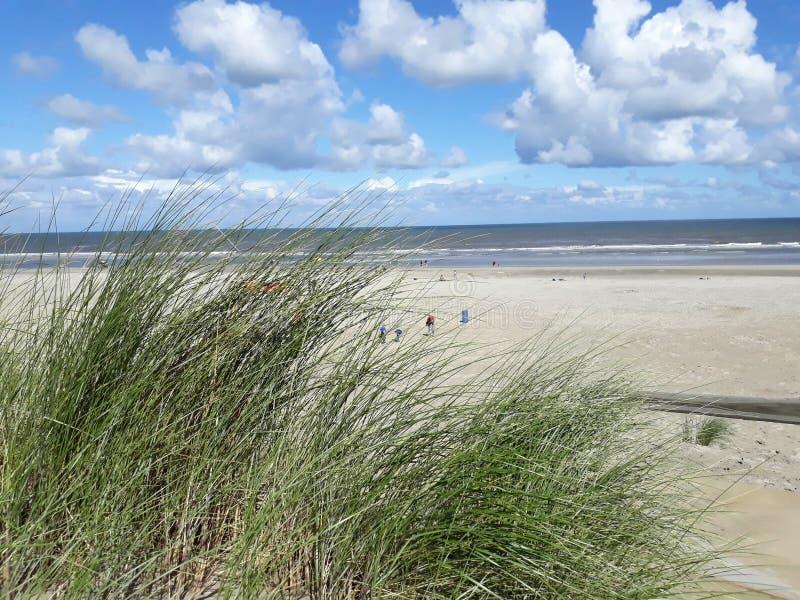Дюны на пляже стоковая фотография