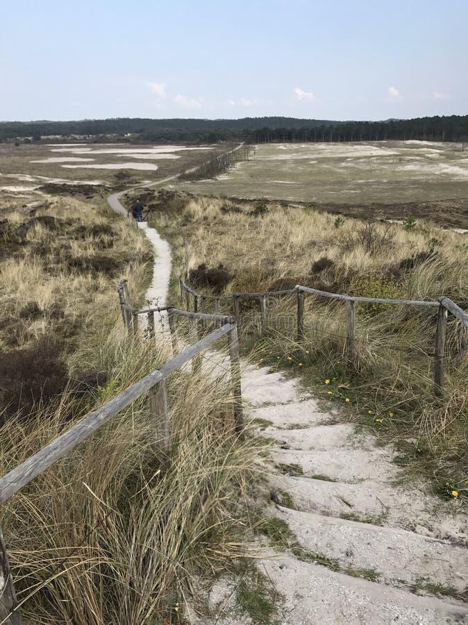 Дюны Нидерланды стоковое изображение