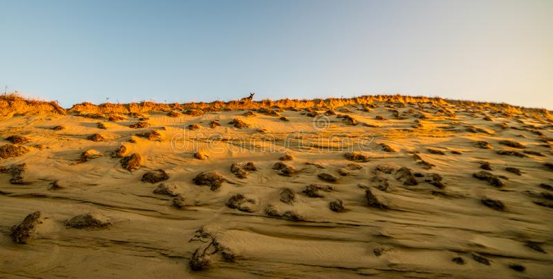 Дюны песок и образование заводов стоковое фото rf