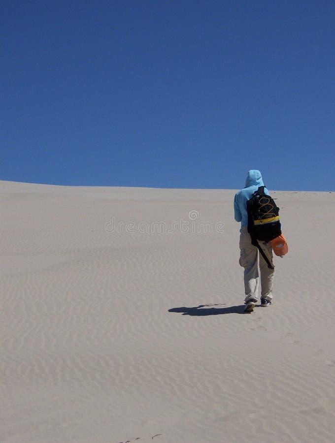 дюны пустыни стоковые изображения