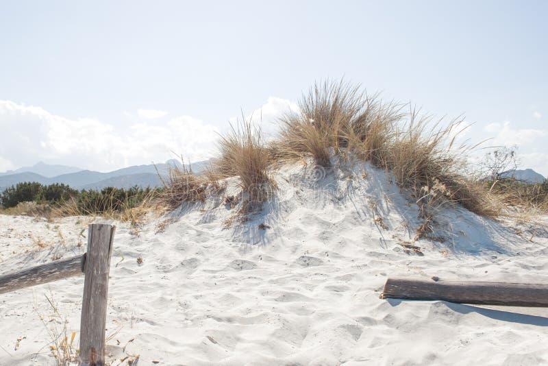 Дюны пляжа Cinta Ла San Teodoro (Сардиния - Италия) стоковая фотография rf