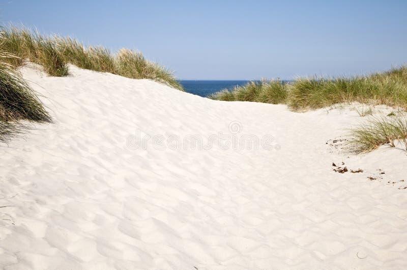 Дюны Северного моря в Дании стоковая фотография