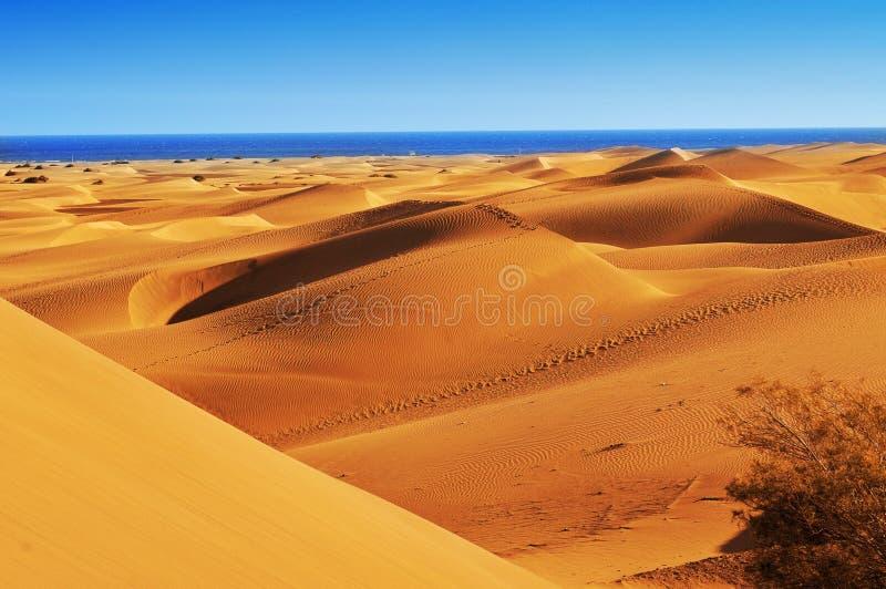 Дюны Maspalomas, в Gran Canaria, Испания стоковые изображения rf