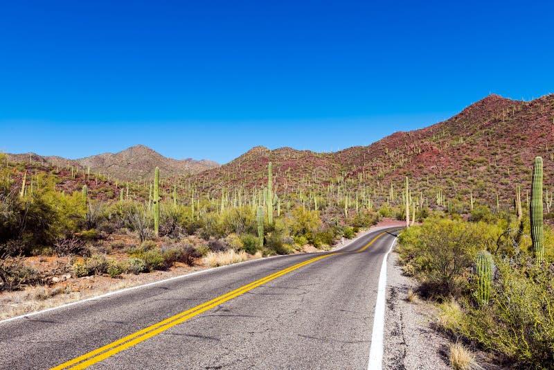 Длинная пустая дорога водит через национальный парк Saguaro стоковое изображение