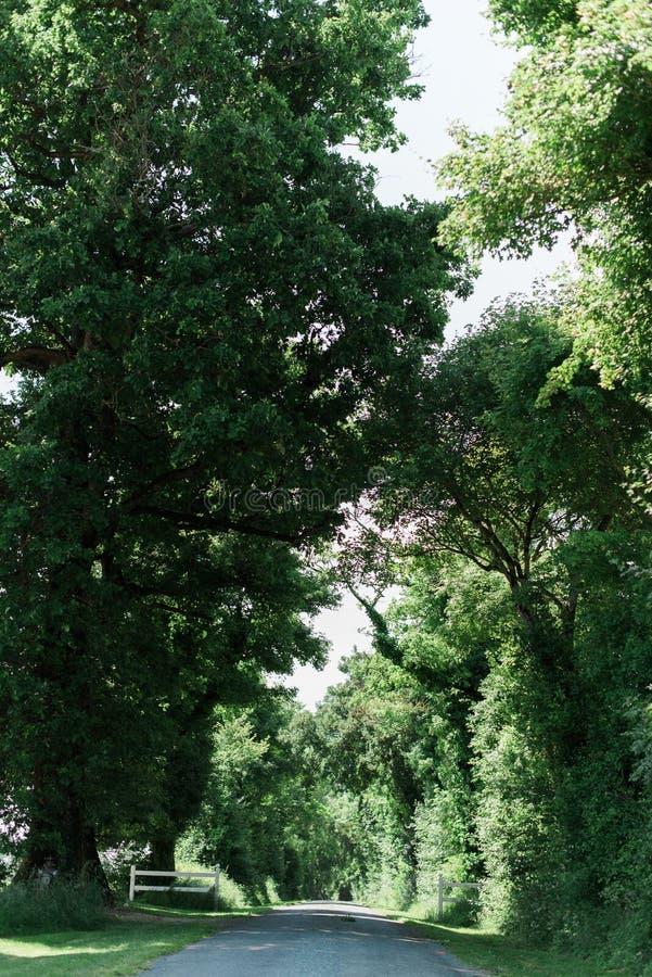 Длинная улица выровнянная с большими зелеными деревьями стоковые изображения rf