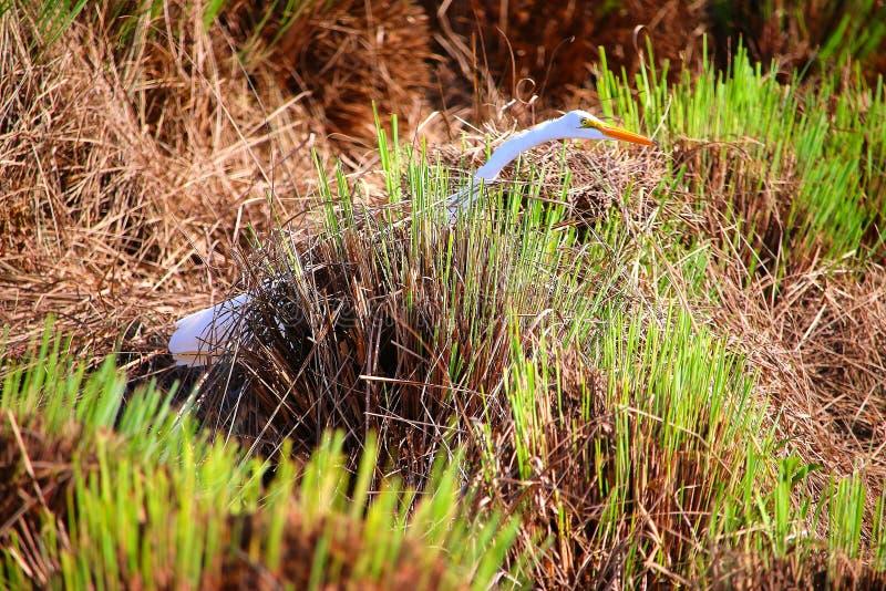 Длинный удлинять птицы шеи стоковые фото