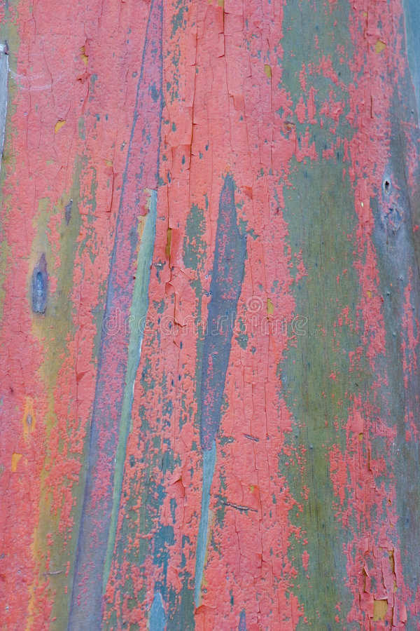 евкалипт 3 расшив стоковое изображение