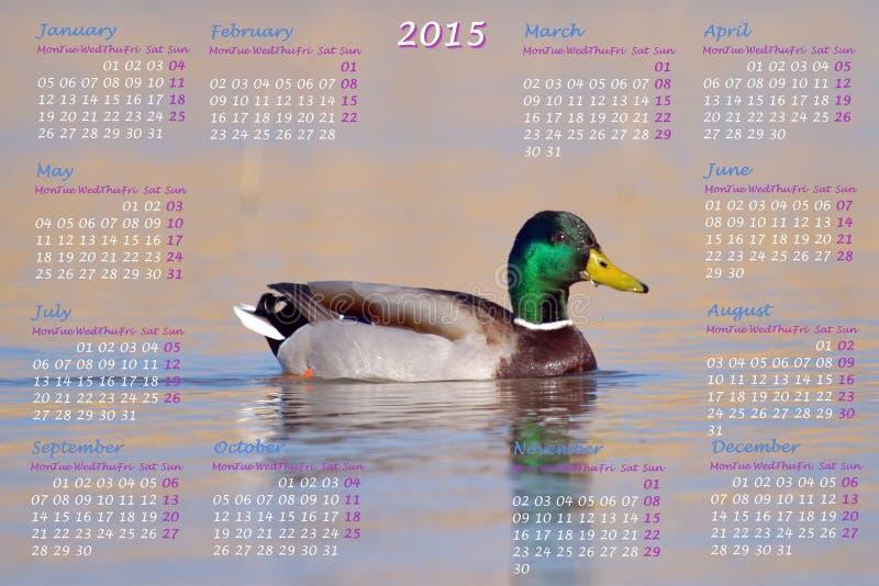 Европеец календарь 2015 год с мужской уткой кряквы иллюстрация штока