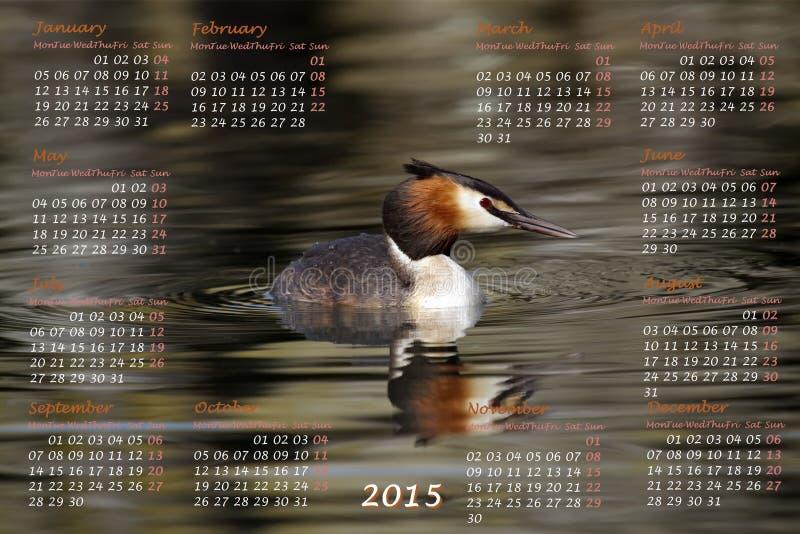 Европеец календарь 2015 год с crested поганковыми бесплатная иллюстрация