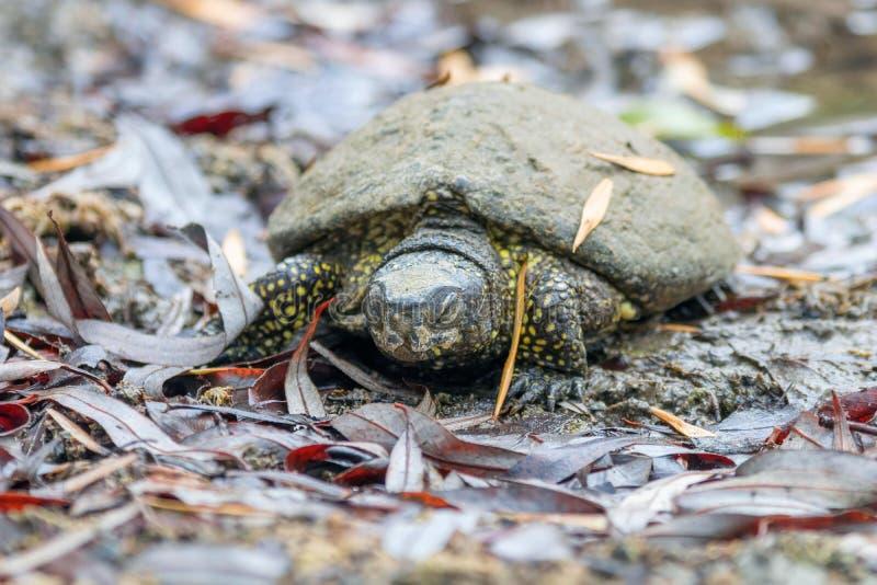 спячка черепах в картинках личных
