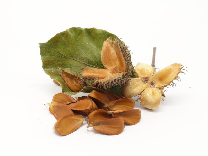 Европейские плодоовощи бука, куча семян и листва стоковые изображения