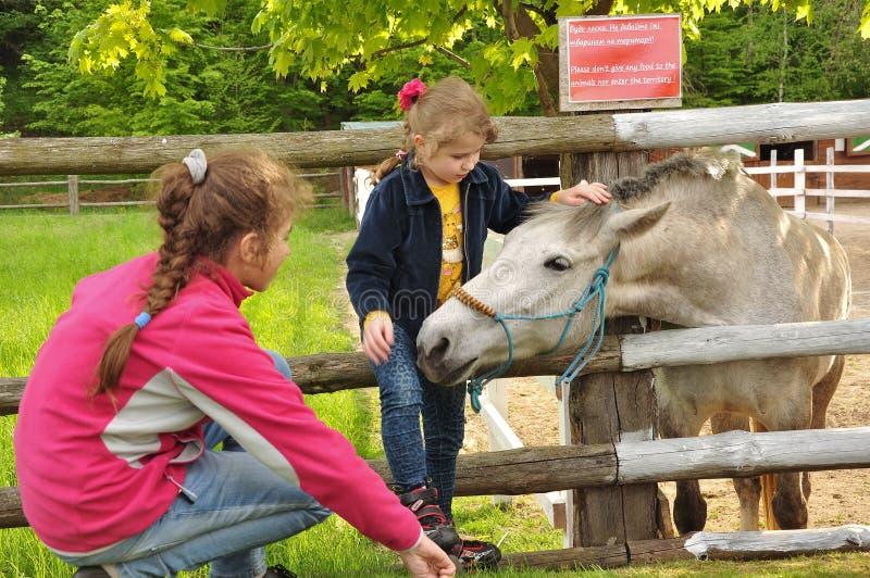 2 девушки и лошади стоковая фотография