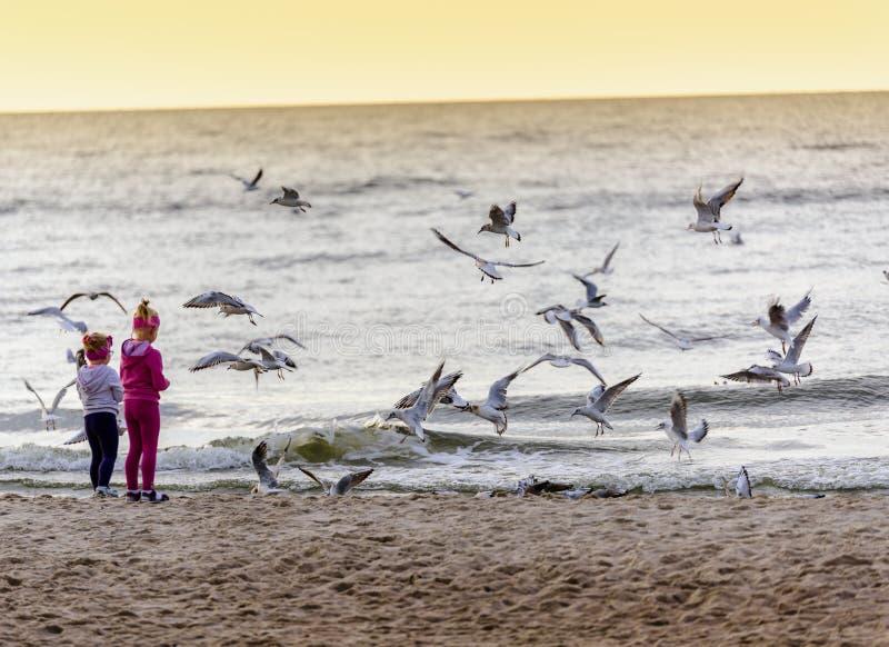 2 девушки подавая чайки стоковое фото rf