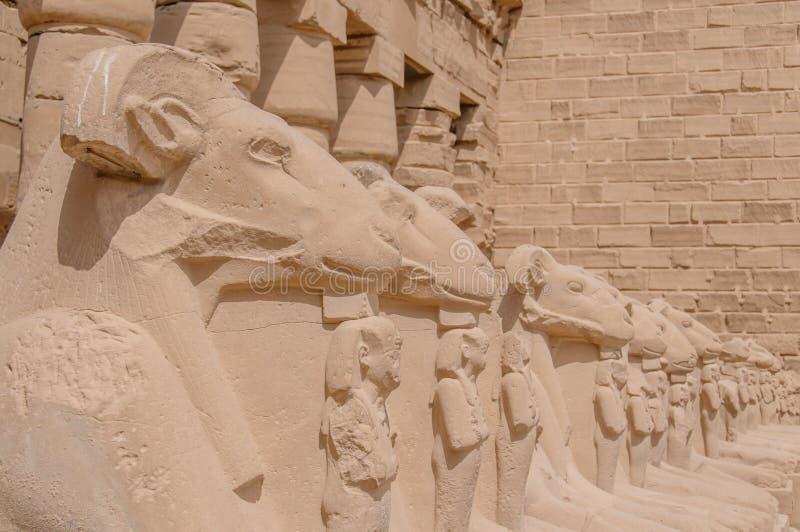 Египет в изображениях стоковые фотографии rf