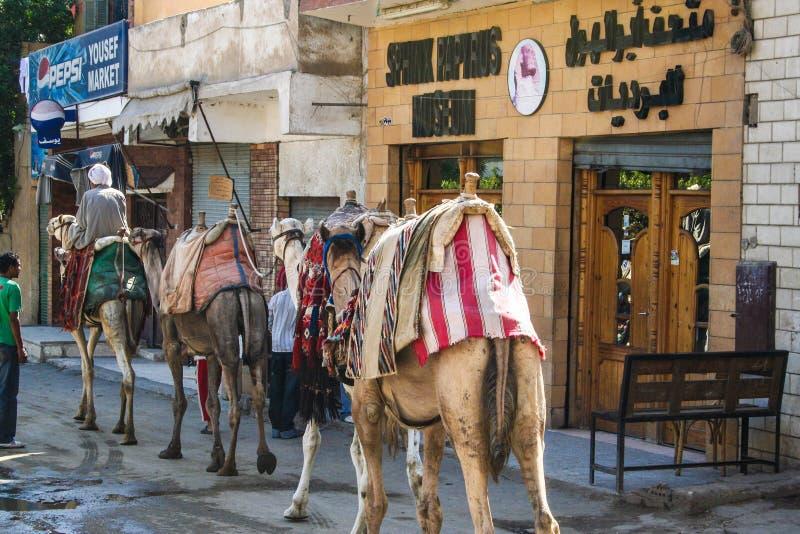 Египет в лете стоковое фото