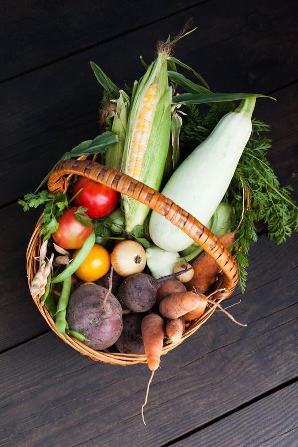 Еда корня земледелия осени, зрелая предпосылка урожая стоковые изображения rf