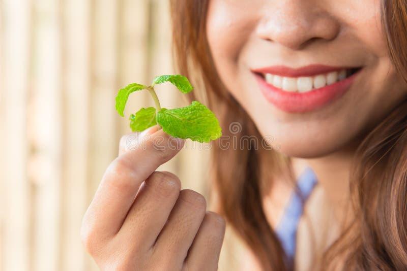 Еда листьев мяты для хорошего зубоврачебного свежего дыхания стоковое изображение rf