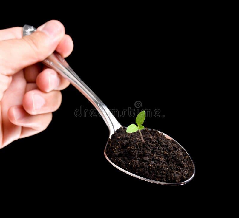 еда органическая стоковая фотография rf