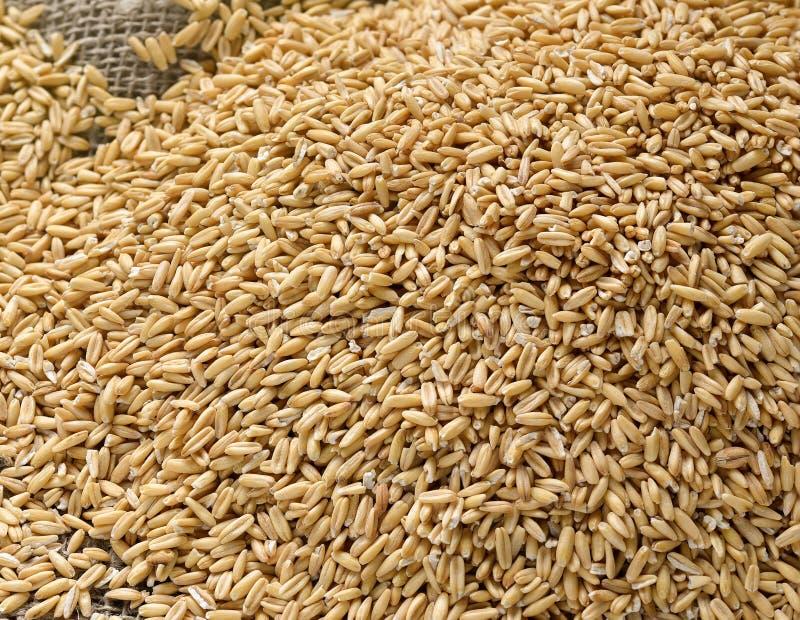 еда принципиальной схемы здоровая Все зерна овсов и spik овса стоковое изображение