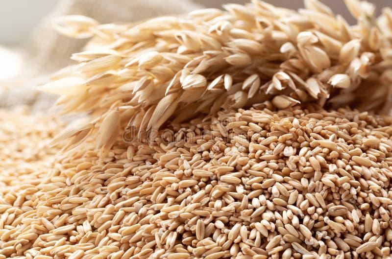 еда принципиальной схемы здоровая Все зерна овсов и spik овса стоковая фотография