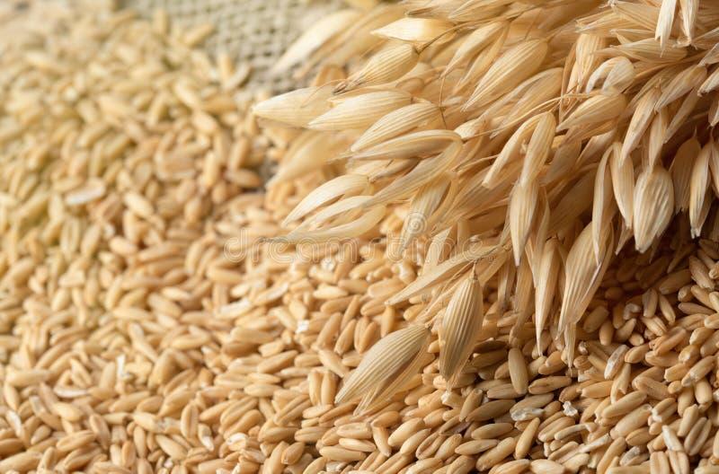 еда принципиальной схемы здоровая Все зерна овсов и spik овса стоковое изображение rf