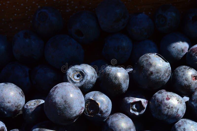 Еда свежей ягоды сбора лета голубики очень вкусная сладостная стоковые фотографии rf
