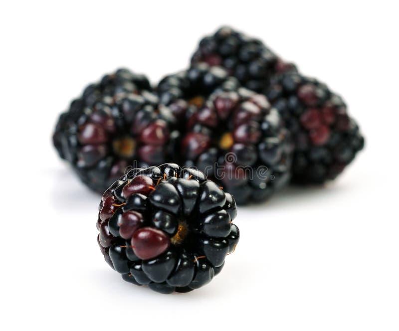 Ежевики Dewberries стоковые фото