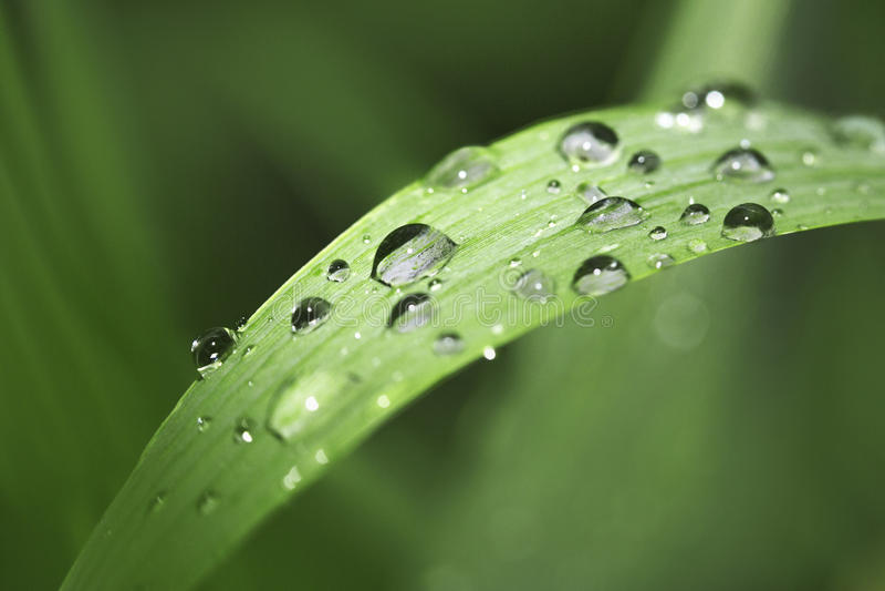 лезвие падает вода травы стоковые фото