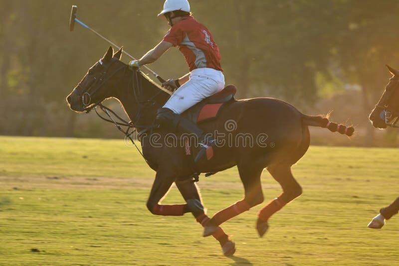 езда игрока поло лошади лошадь в игре на заходе солнца стоковые фото