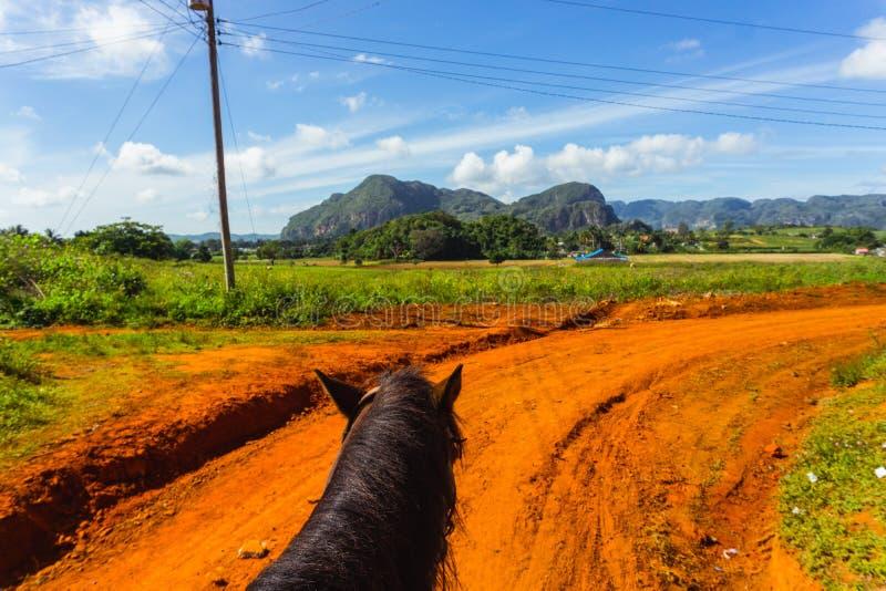 Езда лошади в Кубе Сельская местность Vinales стоковые фотографии rf