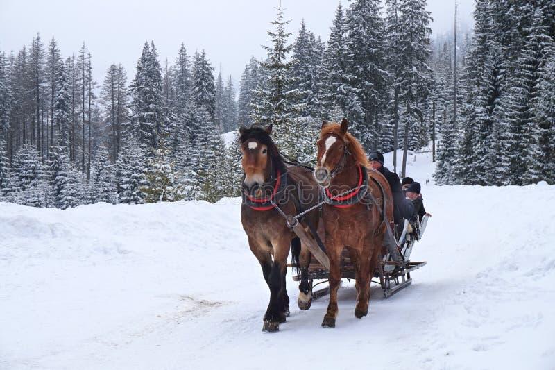 Езда лошади Morskie Oko стоковые изображения