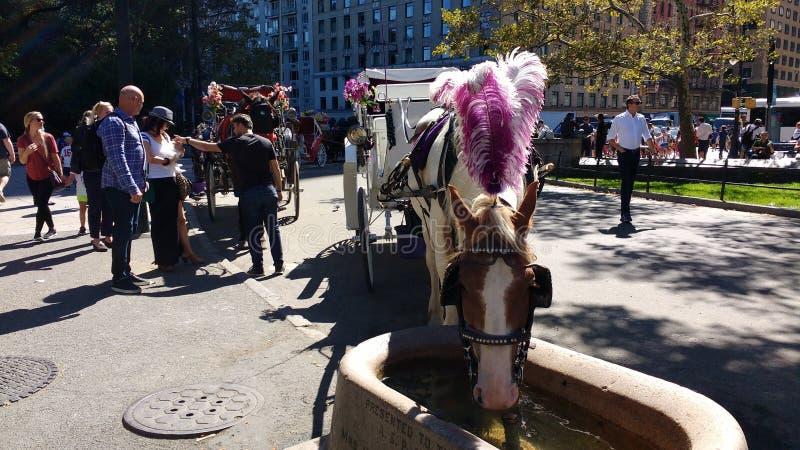 Езды лошади и экипажа в Central Park, NYC, NY, США стоковое изображение rf