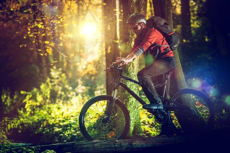 Езда велосипеда в сценарном лесе стоковая фотография rf