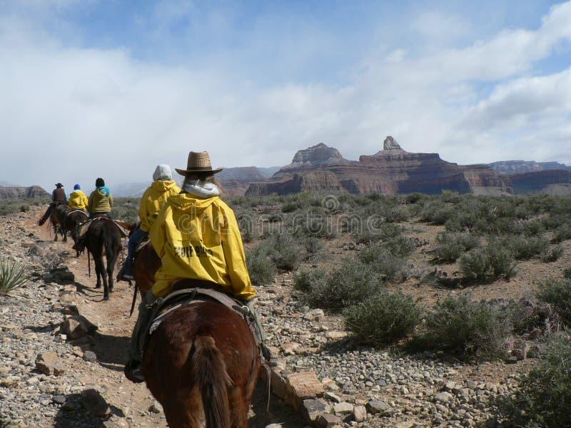 Езда осла в национальном парке гранд-каньона в США стоковая фотография rf