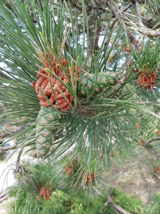 Елевая ветвь Соответствующий для создания рождественских открыток, Нового Года presentationBeautiful зеленых тропических листьев  стоковые изображения