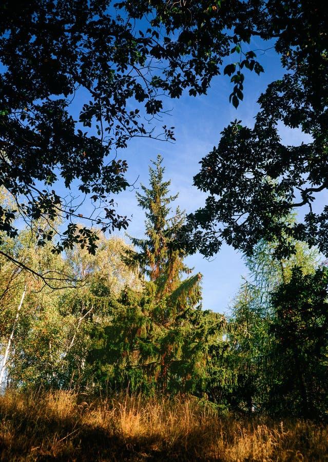 Елевая осень попечителя стоковая фотография rf