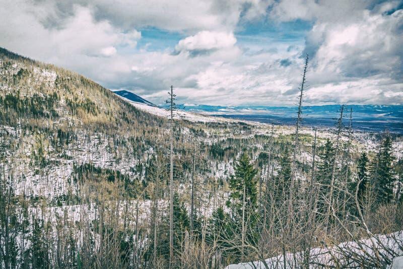 Елевый лес после стихийного бедствия в высоком Tatras, сетноой-аналогов фильтр стоковая фотография