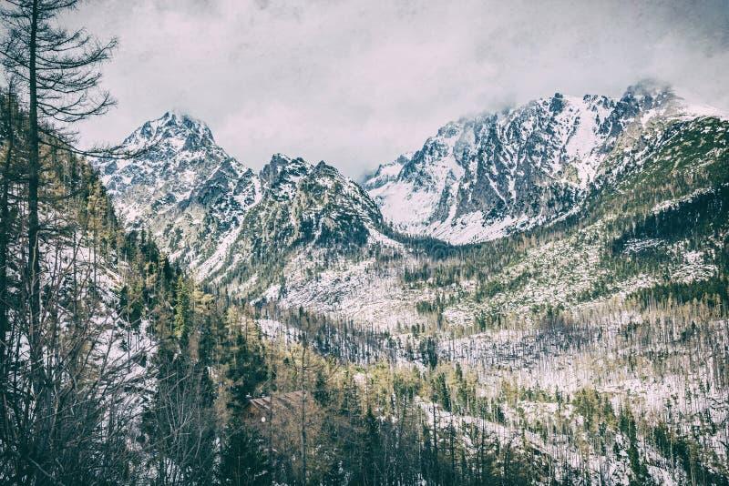 Елевый лес после стихийного бедствия в высоком Tatras, сетноой-аналогов фильтр стоковые фотографии rf