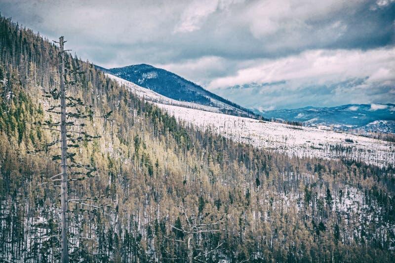 Елевый лес после стихийного бедствия в высоком Tatras, сетноой-аналогов фильтр стоковое изображение