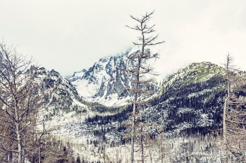 Елевый лес после стихийного бедствия в высоком Tatras стоковое фото rf