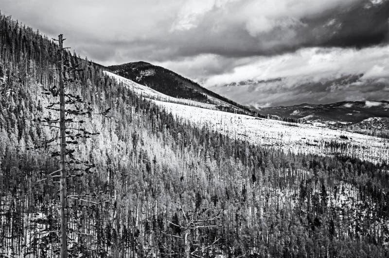 Елевый лес после стихийного бедствия в высоком Tatras стоковая фотография