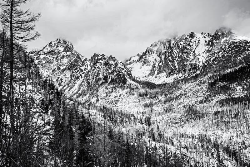 Елевый лес после стихийного бедствия в высоком Tatras стоковые изображения
