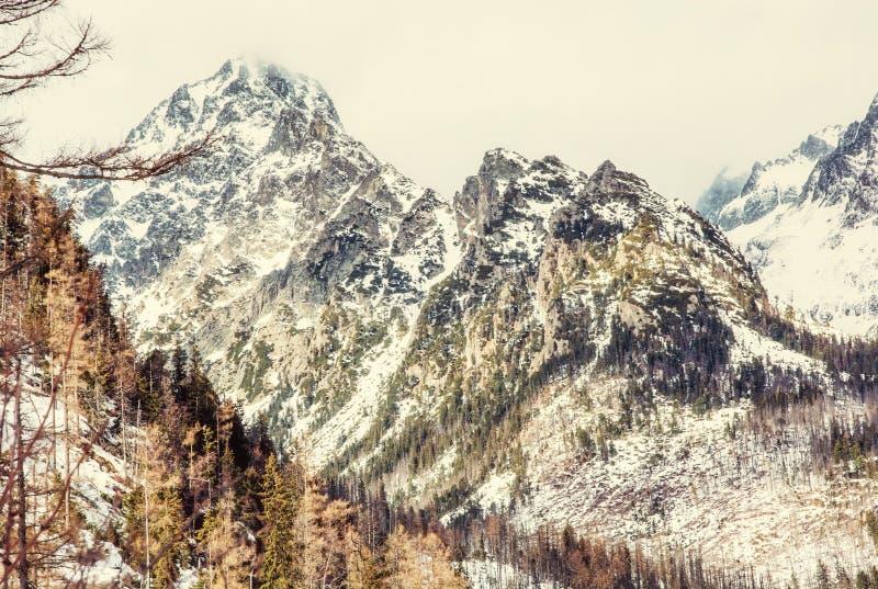 Елевый лес после стихийного бедствия и снежные пики в высоком Tat стоковая фотография rf