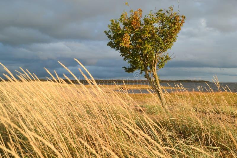 дерево в ветреной погоде стоковое фото rf