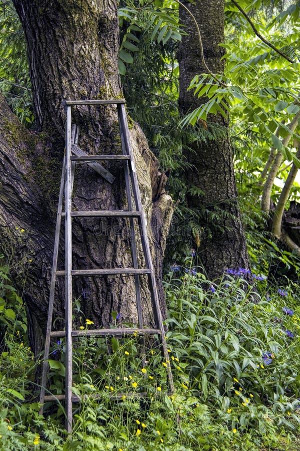 деревянное трапа старое стоковое изображение rf