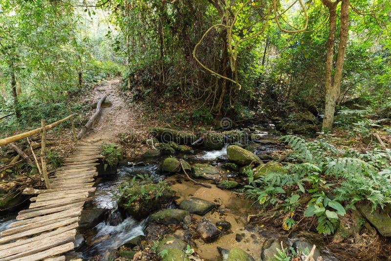 деревянный мост в джунглях стоковое изображение